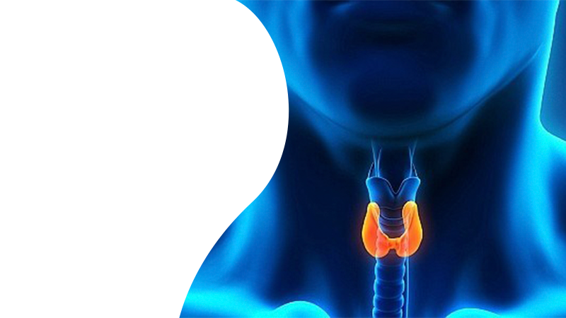 УЗИ щитовидной железы в Гомеле